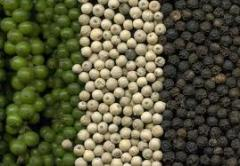 Green Pepper Spice