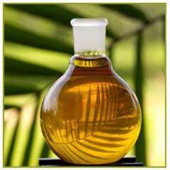 Palm Olein Products