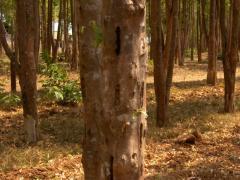 Agarwood Wood Product