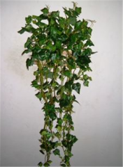 English Ivy Mini