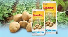 Fungicide Cabriotop