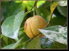 Nutmeg Spice Selection