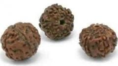 Rudraksha Jenitri Seeds