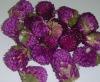 Dried Knob Flower