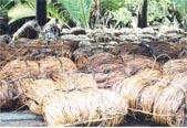 Slimit Natural Raw Rattan