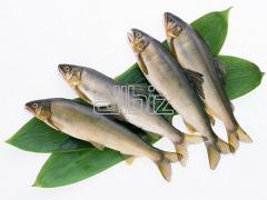 Fish Fry Products