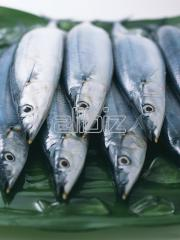 Milkfish Fry Products