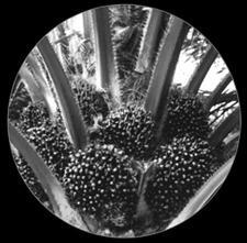 Natural Vegetal K Fertilizer