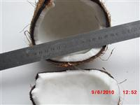 Fresh Semi Husk Mature and Young Coconut