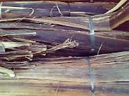 Gembor Bark Raw Material