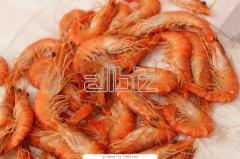 Mantis Shrimp Products