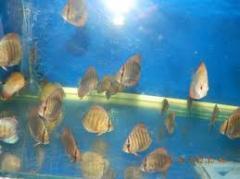 Seed of Cork Fish