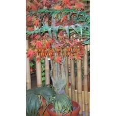 Maple Tree SAF-TP004 5 Ft