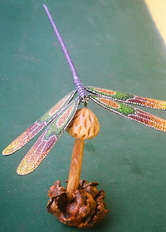 Floating Dragonfly
