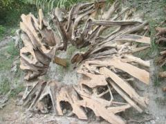 Teak Root Screen
