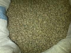 Coffee Papua Arabica