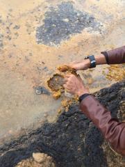 Palm Acid Oil / Palm Sludge Oil