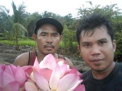 Hebal and Plantations