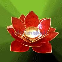 Lotus capiz