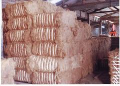 Coconut Fiber / Sabut Kelapa
