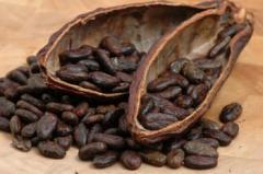 Premium Cocoa Beans