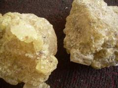 Sell Gum Copal Products