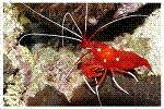Invertebrates Range