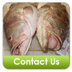 Grouper Fish Products