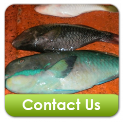 Parrot Fish Products