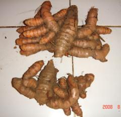 Curcuma Spice Products