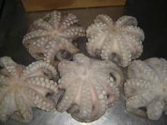 Octopus Flower Whole Cleaned Size 1Kg-up, IQF