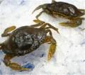 Frozen Crab Soft Shell