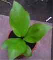 گیاهان مجلس