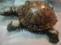 Statue Turtle
