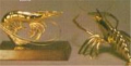Shrimp Brass