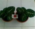 Plants medicinal