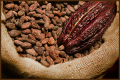 Standard Quality Natural Cocoa Powder