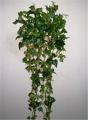 English Ivy Mini