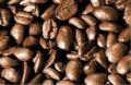 Coffee Robusta