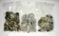 Whole with Shell Frozen Abalones Vacuum Pack
