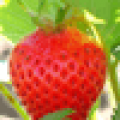 Body Mask Strawberry