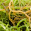 Body Mask Seaweed