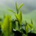 Body Mask Green Tea