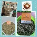 Sumatra Coffee Gayo Mandheling Linthong Lintong Dolok Sanggul