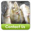 White Emperor Fish