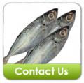 Big Eye Scad Fish